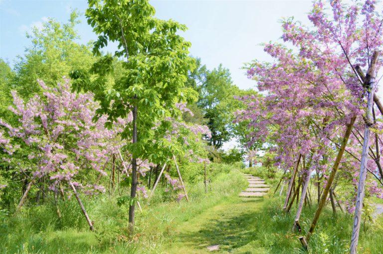 ノームの散歩道6月